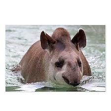 Tapir 002 Postcards (Package of 8)