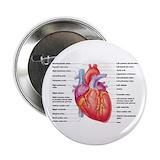 Human heart Single