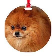 Cute Pomeranian lover Ornament