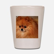 Cute Pomeranian lover Shot Glass