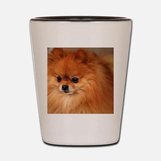 Cute Pomeranians Shot Glass