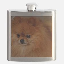 Unique Pomeranian Flask