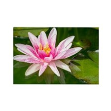 Pink Waterlily Rectangle Magnet
