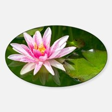 Pink Waterlily Decal