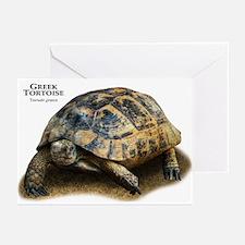 Greek Tortoise Greeting Cards (Pk of 20)