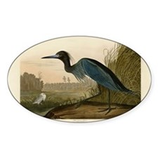 Audubon Blue Crane Heron from Birds of America Sti