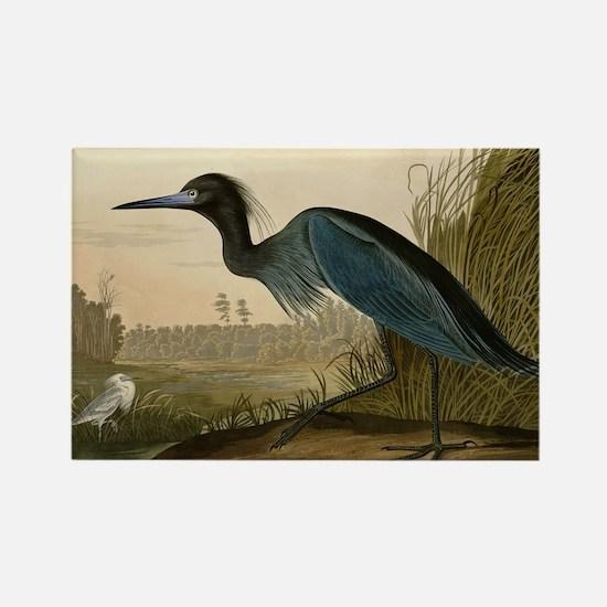 Audubon Blue Crane Heron from Birds of America Mag