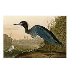 Audubon Blue Crane Heron from Birds of America Pos