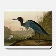 Audubon Blue Crane Heron from Birds of America Mou