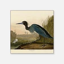 Audubon Blue Crane Heron from Birds of America Sti