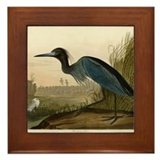 Audubon Blue Crane Heron from Birds of America Fra