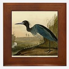 Audubon Blue Crane Heron from Birds of America Fra