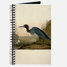 Audubon Blue Crane Heron from Birds of America Jou