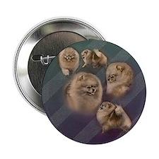 "Toy dogs Pomeranian 2.25"" Button"