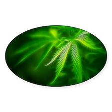 Green Dream Decal