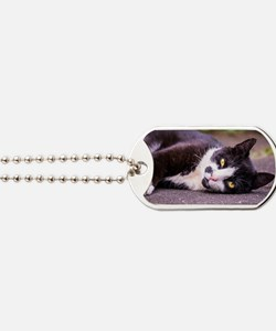 Black and white cat Dog Tags