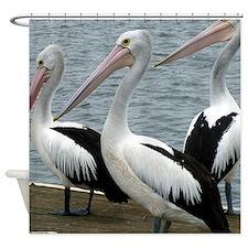 Three Gorgeous Pelicans Shower Curtain
