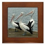 Three Gorgeous Pelicans Framed Tile
