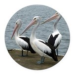 Three Gorgeous Pelicans Round Car Magnet