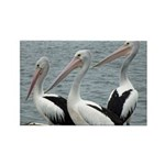Three Gorgeous Pelicans Rectangle Magnet (10 pack)