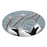 Three Gorgeous Pelicans Sticker (Oval 10 pk)