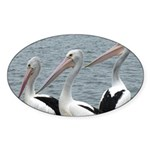 Three Gorgeous Pelicans Sticker (Oval 50 pk)