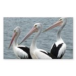 Three Gorgeous Pelicans Sticker (Rectangle)