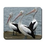 Three Gorgeous Pelicans Mousepad