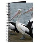 Three Gorgeous Pelicans Journal