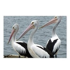 Three Gorgeous Pelicans Postcards (Package of 8)