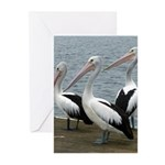 Three Gorgeous Pelicans Greeting Cards (Pk of 20)