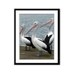 Three Gorgeous Pelicans Framed Panel Print