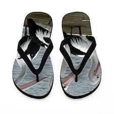 Three Gorgeous Pelicans Flip Flops