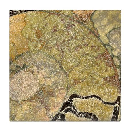 Ammonite Fossil Tile Coaster