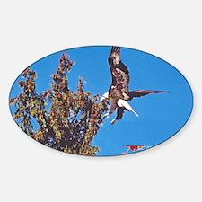 Wild Bald Eagle Landing Decal