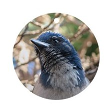Expressive Western Scrub Jay Round Ornament