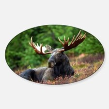 Majestic Moose Decal