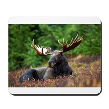 Majestic Moose Mousepad