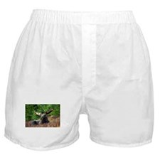 Majestic Moose Boxer Shorts