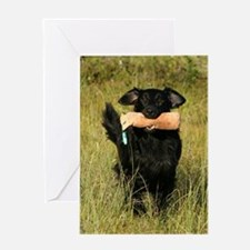 flat coated retriever retrieving Greeting Cards