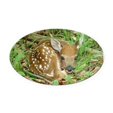 spotted fawn Oval Car Magnet