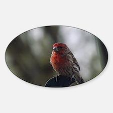 Purple Finch - 1 Decal