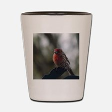 Purple Finch - 1 Shot Glass