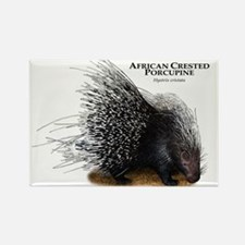 African Crested Porcupine Rectangle Magnet