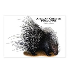 African Crested Porcupine Postcards (Package of 8)