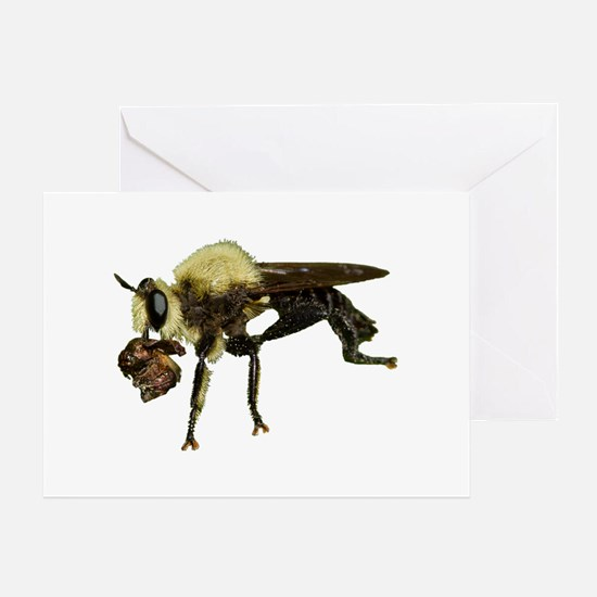 Robber Fly with Lunch Greeting Card