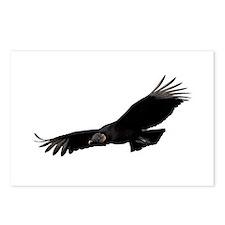 Black Vulture Postcards (Package of 8)