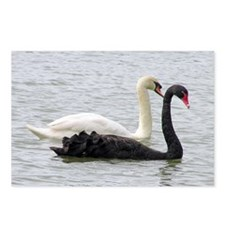 ...Black & White Swans... Postcards (Package of 8)
