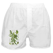 Marijuana Illustration Boxer Shorts