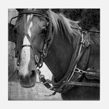Amish Horse in Black and White Tile Coaster
